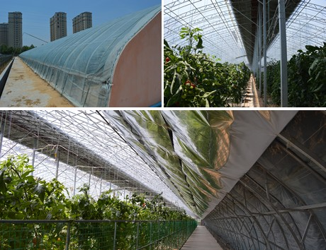 17th International Vegetable Science And Technology Expo