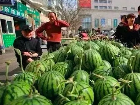 Sharp drop in Vietnamese watermelon exports to China